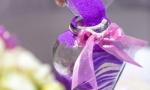 svadba-i-progulka-na-yahte-v-dominikanskoy-respublike-10