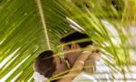 svadba-na-ostrove-saona-11