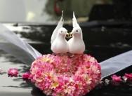 Голуби в день свадьбы